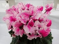 久々に温室探索♪ - 手柄山温室植物園ブログ 『山の上から花だより』