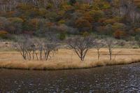 寂寥の湿原 - 風の彩り-2