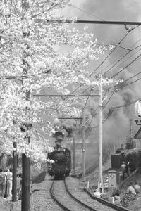 桜咲く中を黒煙もくもくと- 秩父・1988年 - - ねこの撮った汽車