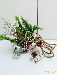 クリスマスを楽しむお花 - 気まぐれ雑草日記
