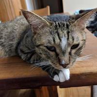 わがままな猫 - 一歩前進したかも日記