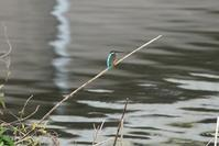 水辺の鳥 - 暮らしの中で