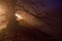 十二月の霧@ 水上池界隈 - 東大寺が大好き