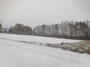 冬らしくなりました -
