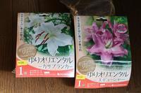 ちょっとだけ買い物*ハンギングその後 - my small garden~sugar plum~
