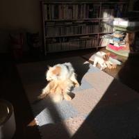陽だまりで - ぶつぶつ独り言2(うちの猫ら2018)