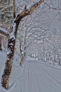 冬の坂道 - へっぽこな・・