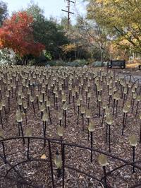 デスカンソ・ガーデン・Enchanted Forest of Lights を訪問 - アバウトな情報科学博士のアメリカ