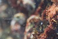 小雪舞う - Diving Life ~Aita pe'a pe'a~