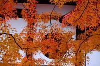 京都東福寺の紅葉 - スポーツカメラマン国分智の散歩の途中で