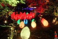 チームラボ 森と湖の光の祭「自立しつつも、呼応する生命」 - Photolog