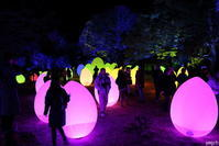 チームラボ 森と湖の光の祭「呼応する、たちつづけるものたちと森」#チームラボ #メッツァ #metsa #夜景 - Photolog