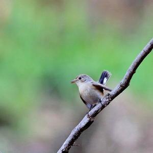 シエロの鳥ノート