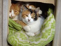 3ニャンズ - ネコと裏山日記