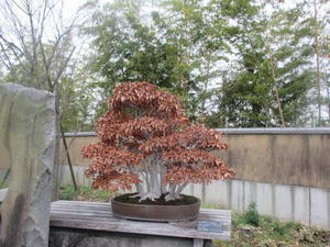 盆栽 - 眠りの森の庭だより