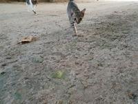 猫とたわむれることのできるローカル島発見 - モルディブ現地情報発信ブログ 手軽に気軽に賢く旅するローカル島旅!