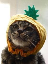 ねこフルーツちゃんパイナップル♪ - キッチンで猫と・・・