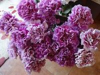 キレイなカーネ - フラワーショップデリカの花日記