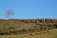 花の丘から④ - 光画日記