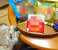 12/15(土)①     【12/11の事】病院巡りでお疲れちゃん💧 - Evergreen. ~常磐に唐草*庭の花~