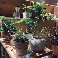 LEDで観葉植物が育つ? - サン建築工房:エコショップブログ