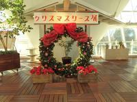 『クリスマスリース展のリース達』 - 自然風の自然風だより