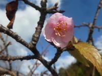 桜咲く。 - 平野部屋