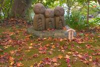 鎌倉長谷寺の紅葉ライトアップ - エーデルワイスPhoto