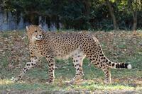 久しぶりのアイガーと、ジョラス(多摩動物園) - 旅プラスの日記