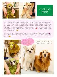 ハーブパック  体験談 - 宮城県富谷市明石台  くさか動物病院ブログ