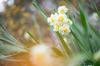 12月のアンジェ〜春を感じる風景 - 柳に雪折れなし!Ⅱ
