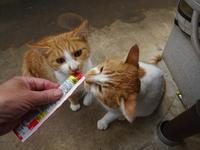 チュール - ネコと裏山日記