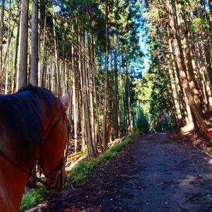いいお天気でした~ - 大阪 兵庫 京都 関西乗馬 関西ホーストレッキング マリンズステーブル