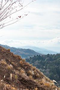 冬枯れの景 2 - 気ままにお散歩
