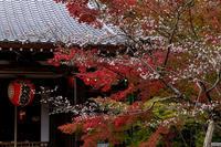京の紅葉2018不断桜と紅葉(赤山禅院) - 花景色-K.W.C. PhotoBlog