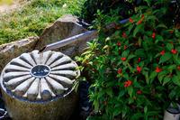 花が彩る雲龍院 - 花景色-K.W.C. PhotoBlog