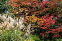京の紅葉2018秋色の詩仙堂 - 花景色-K.W.C. PhotoBlog