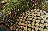 夜の花壇@神戸・フラワーロード - たんぶーらんの戯言
