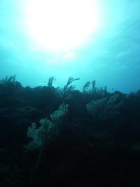 合間の晴れ間は気持ち良い~~糸満近海ガイド付きボートダイビング(ファンダイビング)~ - 沖縄本島最南端・糸満の水中世界をご案内!「海の遊び処 なかゆくい」