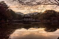 季節はずれの鷺池 - toshi の ならはまほろば