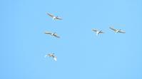 陣馬山登山探鳥会 - 山と鳥を愛するアナパパ