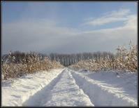 雪中の散策 - 好い加減に過ごす2