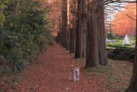ルンコたんの秋のお散歩 - ルンコたんとワタシの心模様