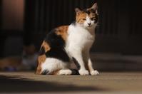 ジュニちゃん - ネコと裏山日記