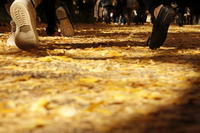 ✿神宮外苑いちょう祭り - ✿happiness✿