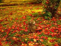 秋の紅葉にお地蔵様 - 風の香に誘われて 風景のふぉと缶
