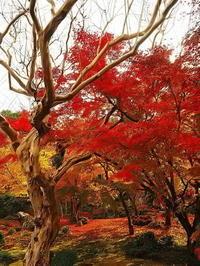 圓光寺淡い秋日向 - 風の香に誘われて 風景のふぉと缶