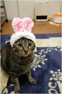ねこウサギ(チー子) - 4にゃん日記+
