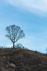 冬枯れの景 3 - 気ままにお散歩