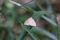 冬の蛾など - 野山の住認たちⅡ